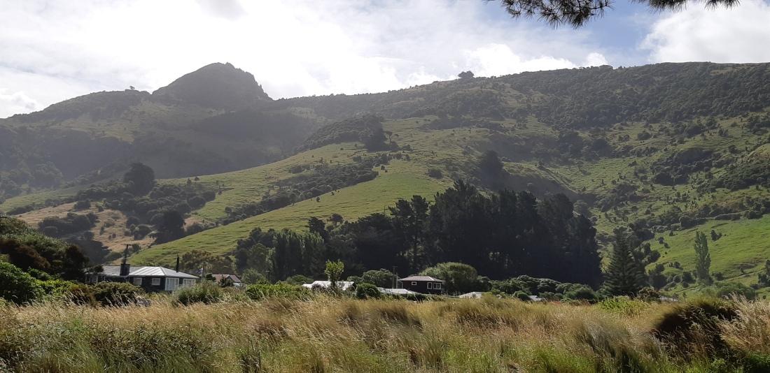 kiwi baches